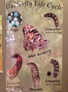 MiSciButterflies1